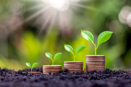 Grow early on coins and soil ideas for saving money, financial growth and profit from business investments.