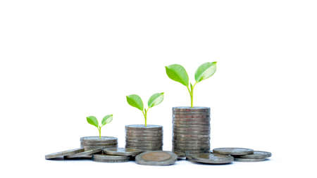 Coin pile and green leaf plant growth on coin on white money saving concept, banking finance business.