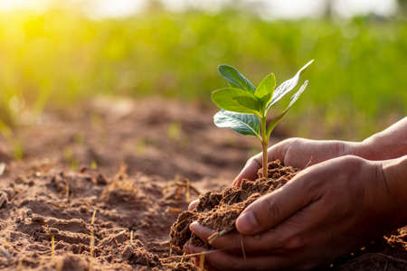 Human hands are planting trees and watering the plants to help increase oxygen in the air and reduce global warming. Stock Photo