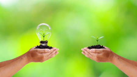 Exchange of trees and trees planted in light bulbs to save human hands energy Imagens