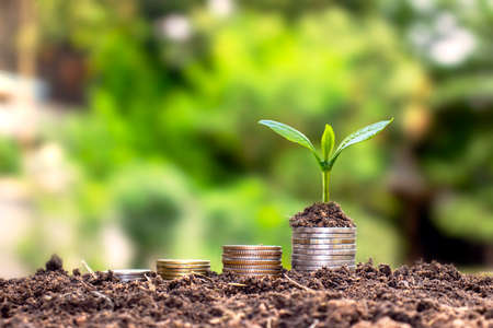 A tree that thrives on piles of money and soil a successful financial and investment concept