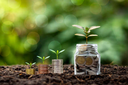 Small plants growing on piles of money and coin bottles on soil business and investment growth ideas. Stock fotó