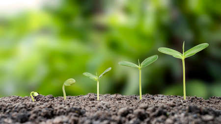 small trees growing on soil and environmental care concept and world environment day