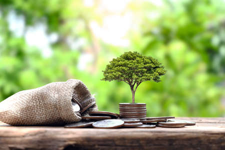 tree on the pile of coins and money bag finance concept and growth business finance