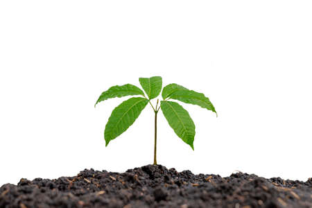 The trees are growing from the soil on a white background.