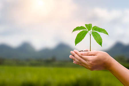Tree planted in human hands with natural green background. concept of plant growth and environmental protection on world environment day