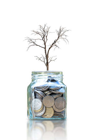 Dying dry tree on a bottle for saving money isolated on white background Zdjęcie Seryjne