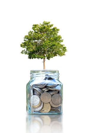growing tree on a bottle for saving money isolated on white background Zdjęcie Seryjne