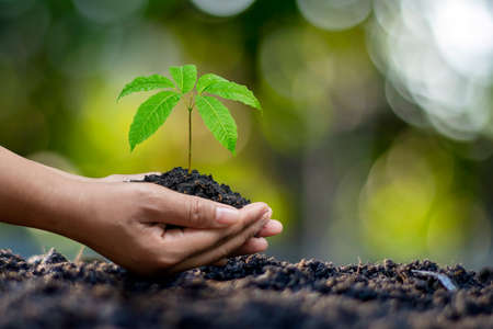 Human hands planting seedlings or trees in the soil Earth Day and global warming campaign. Zdjęcie Seryjne