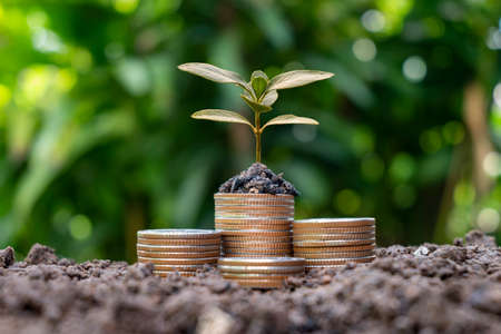 The tree is growing on a pile of coins with a natural backdrop, blurry green, money-saving ideas and economic growth.