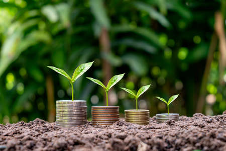 Coins and crops on coins with blur green background finance, investment, and money growth concept.
