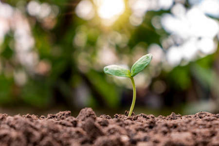 Seedlings grow from fertile soil, ecological concepts, and plant growth.