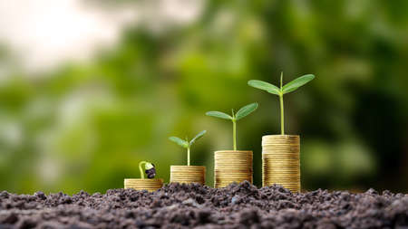 Trees grow on piles of gold coins on the ground, business growth tips. Investment in agribusiness and agricultural processing