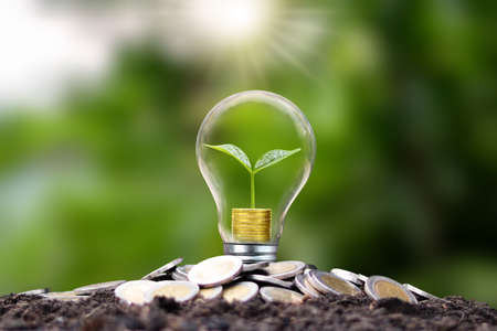 The tree grows with gold coins in energy-saving lamps. Energy saving and renewable energy concepts