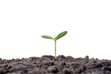 small tree growing on the ground isolated on white background business growth development concept
