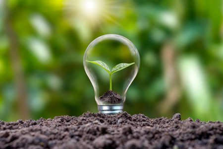 Trees growing in energy-saving and energy-saving bulbs are environmentally friendly. renewable energy concept Clean energy alternatives to generate electricity