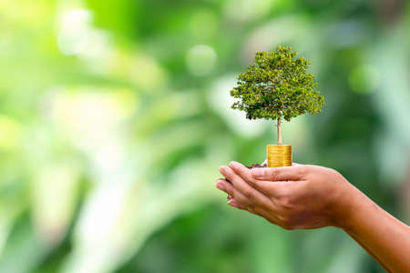 plant on coin in human hand and blur green nature background plant growth concept and investments that are environmentally friendly