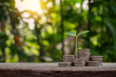 The sapling growing on a pile of coins has a natural, blurry green background. money saving ideas and economic growth