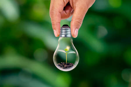 Hand holding energy-saving lamps and small plants Growing energy-saving lamps, conservation of natural resources and the environment.