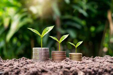 tree growing on pile of coins on ground business growth concept Investment in agribusiness and agricultural processing