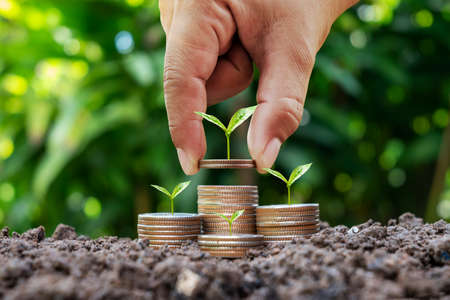 Woman holding coin with tree on coin to save money and blurred green nature background, environmental investment concept.