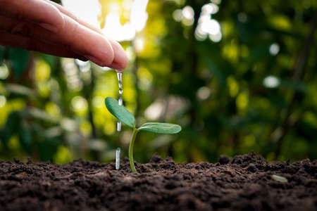Farmers are watering small plants by hand with the concept of World Environment Day.