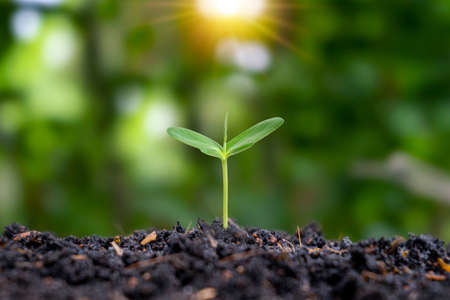 The seedlings are grown from fertile soil and the morning sun shines on the plants. ecological balance concept Ecosystems and Plant Cultivation