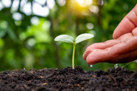 Hands nourishing plants and watering baby plants that grow naturally on fertile soil, seed, and hand planting ideas.