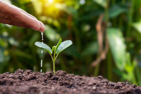 Hand watering plants grown on good quality soil in nature, planting ideas and plant care.