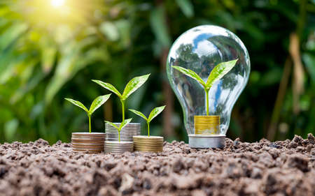 Trees grow on coins in energy-saving light bulbs, energy-saving, and environmental concepts on earth day.