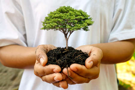 A seedling growing on the soil in a woman's hand, afforestation and forest conservation concept.
