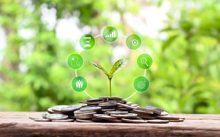 Sapling growing on pile of coins and business finance growth icon money saving concept Zdjęcie Seryjne