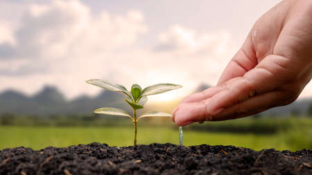 hand watering plants planted on soil and nature background with sun rays planting ideas Zdjęcie Seryjne
