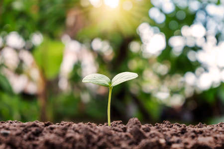 Small plant growing on soil and blurred green background. plant growth concept.
