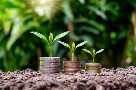 Small tree grows on coins and trees on money grows in soil, investment and finance ideas. Zdjęcie Seryjne