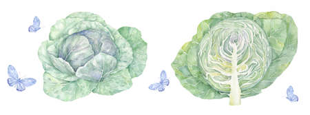 Cabbage with big bright green leaves. Fresh and healthy food. Vegetarian nutrition. Organic ingredient for salad. Flat icon
