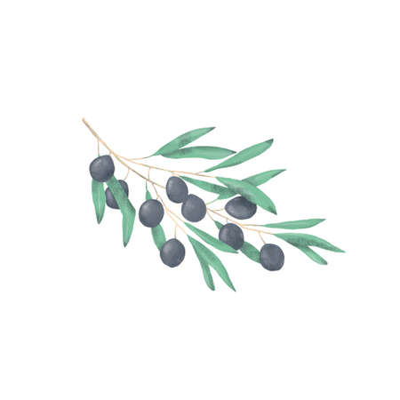 Olive digital clip art watercolor drawing flowers illustration similar Stock Photo