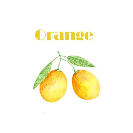 Watercolor orange. Citrus. Recent watercolor paintings of organic food. Fresh exotic fruit. Stok Fotoğraf