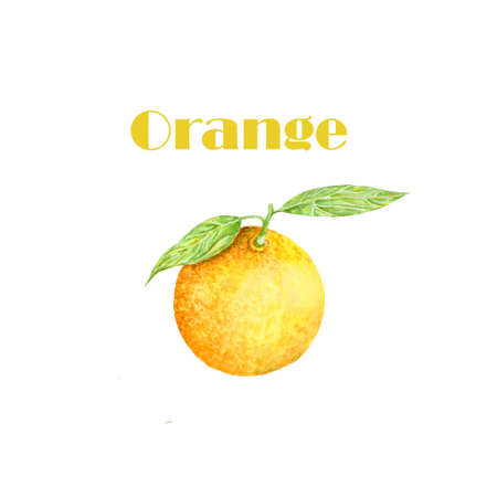 Watercolor orange. Citrus. Recent watercolor paintings of organic food. Fresh exotic fruit. Banque d'images - 120668285
