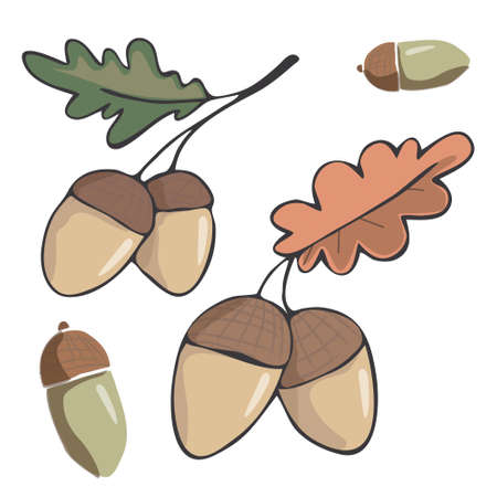 Acorn figure illustration leaf drawing color element vector wood forest fruit of oak green red orange one two acorns white background