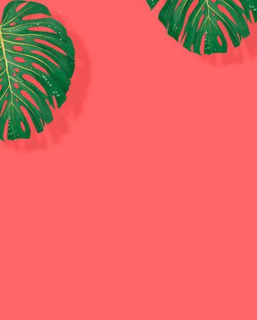 Tropical leaves monstera and philodendron on pink color background summer