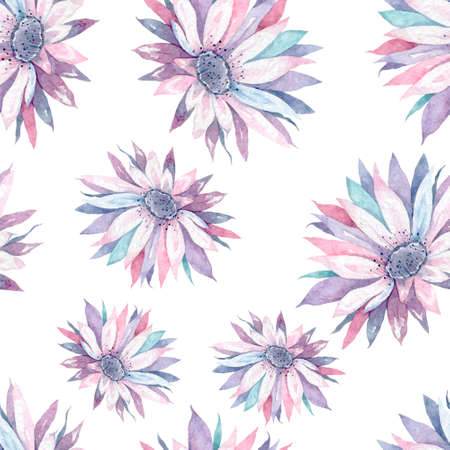 Beautiful soft pink cactus flower, isolated on white background