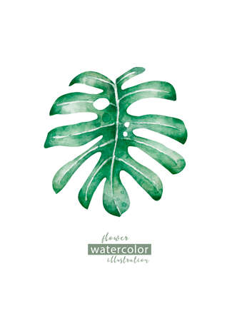 Watercolor floral on white background. Jungle leave. Palm leaf Similar illustration leaf geen color