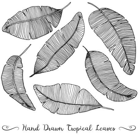 6 different hand drawn vector banana leaves, isolated on white tropical leaves drawing