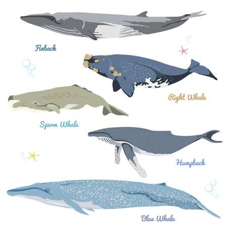 wieloryby ze świata realistyczne ikony ilustracji wektorowych obejmują finback, prawy wieloryb, spermy wieloryb, plecy, niebieski wieloryb Ilustracje wektorowe