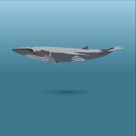 marine mammal: whale under water vector stock iilustration showing marine mammal