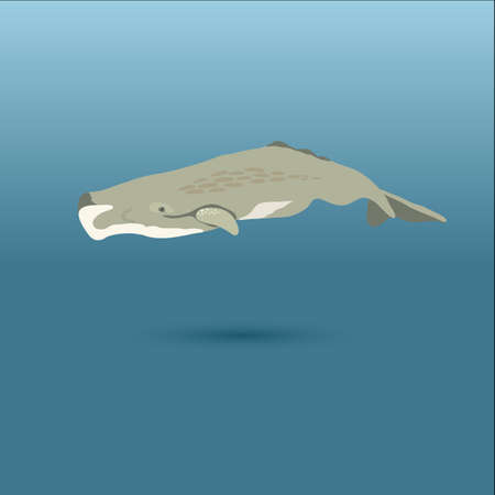 cachalot: whale under water vector stock iilustration showing marine mammal