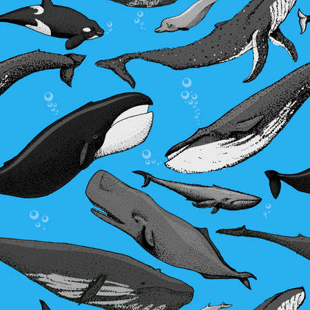 Set of hand drawn whales include blue whale, finback, orca, killwhale, humpback, sperm whale, bowhead