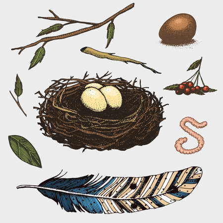 set of hand drawn nest. leaves. berry. egg and food for birds, house for birds Illustration