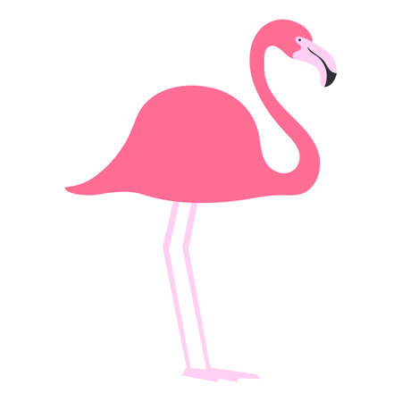flat bird isolated on white background, beautiful illustration pink flamingo